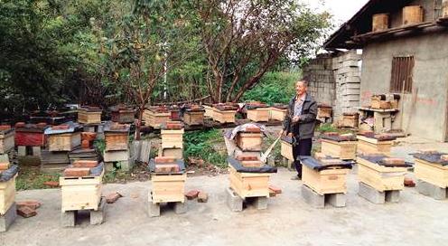 养蜂知识 蜂箱 蜂农 养蜂技术