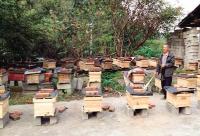 泰安市精准扶贫 蜜蜂发放蜂箱给农民养蜜蜂