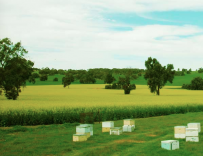 明明可以靠才华 这90后偏偏养蜜蜂