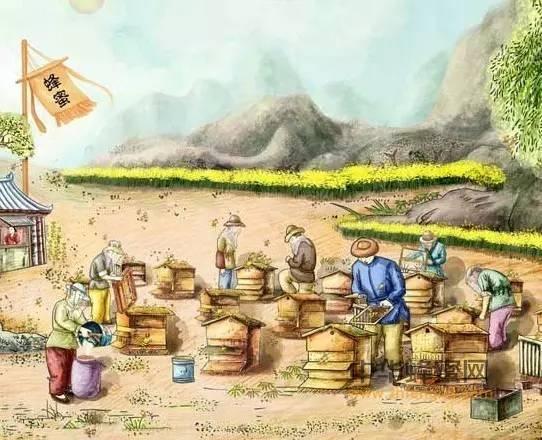 【红枣蜂蜜】_如何喝好蜂蜜 先认识蜂蜜
