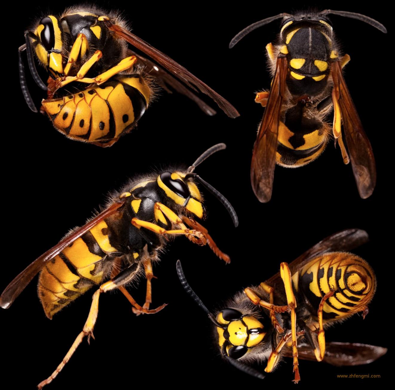 伍兴吉 养蜂人 蜂王 蜂毒 胡峰