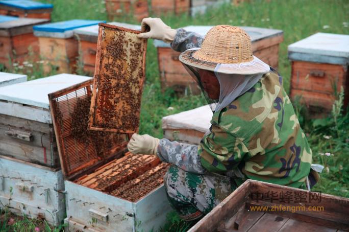 养蜂人 蜜蜂 蜂蜜 蜂箱