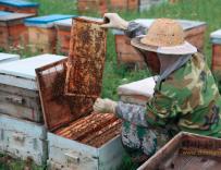 追逐甜蜜事业的养蜂人