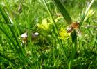 新疆黑蜂 蜜蜂 蜂种 蜜蜂品种