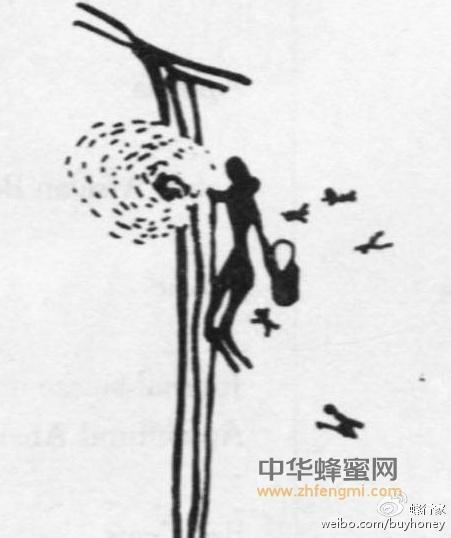 【云岭蜂蜜】_蜜蜂的倾诉:真与假的较量