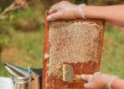 蜂蜜 成熟蜜 蜂蜜结晶 蜂蜜发酵 蜂蜜加热
