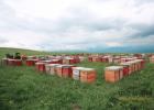 养蜂人 蜂农 养蜂 蜂蜜