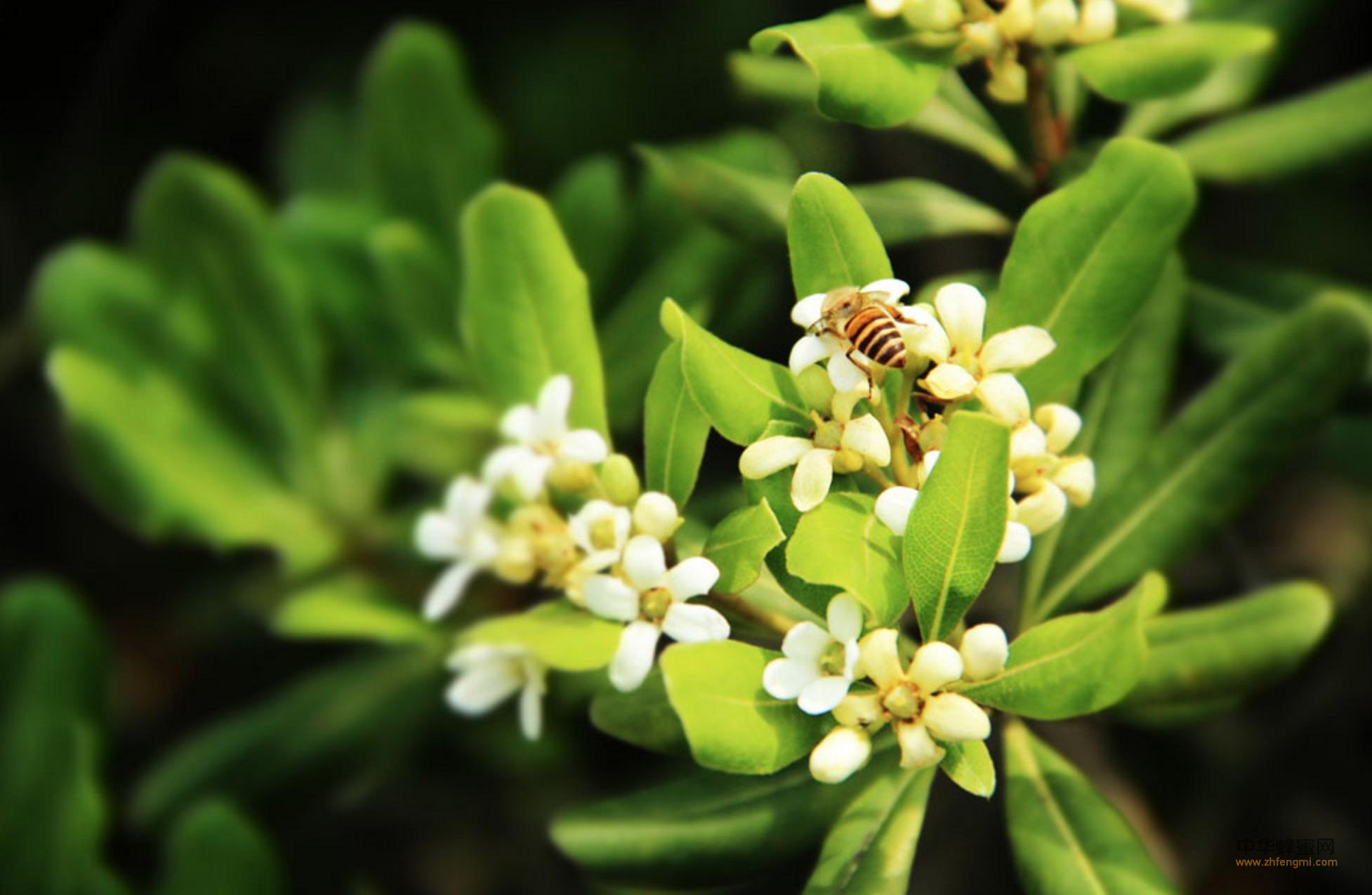 法新社 授粉 蜜蜂 作物