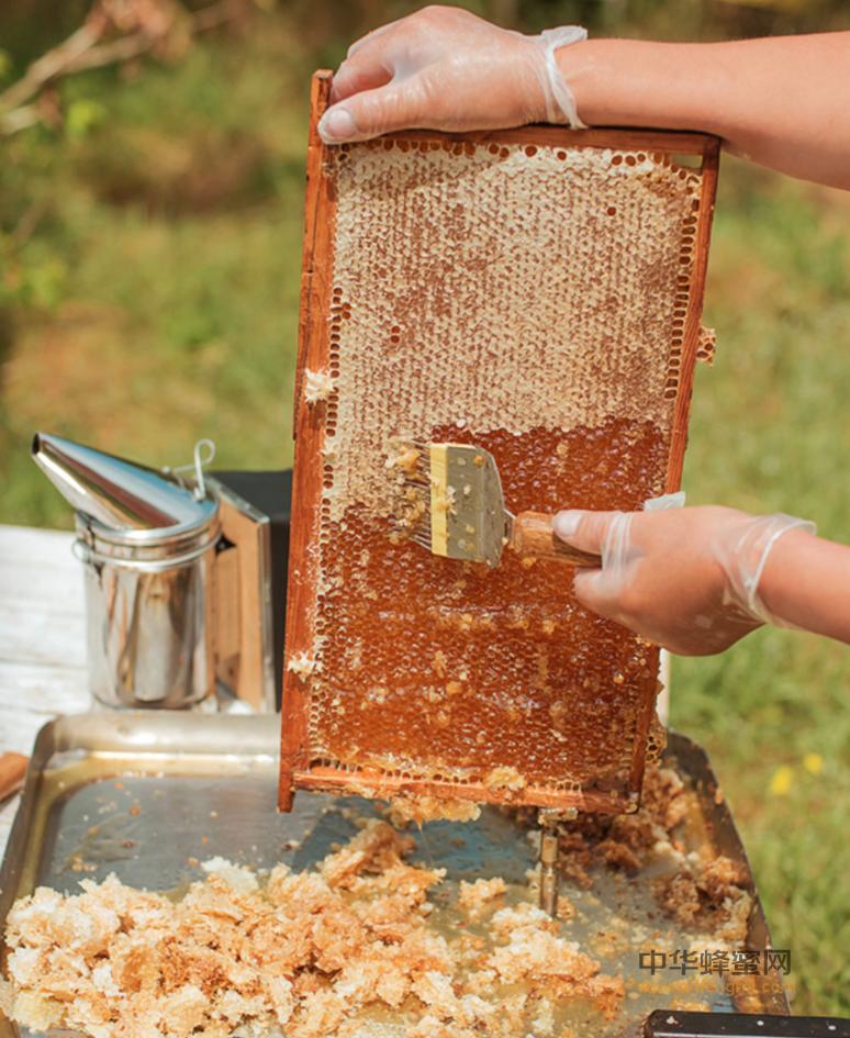 原蜜 加工 浓缩 成熟蜜