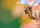 养蜂人 王镇东 蜜蜂 养蜂