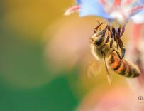 王镇东:希望养蜂手艺世代相传