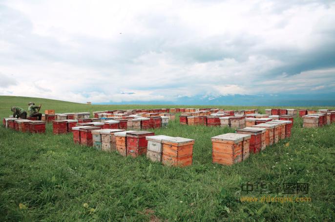 蜜蜂 蜂箱 养蜂 偷蜂