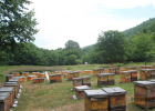 养蜂人 贾大会 养蜂 蜂蜜