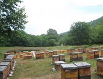 养蜂人贾大会养蜂卖蜜为妻治病