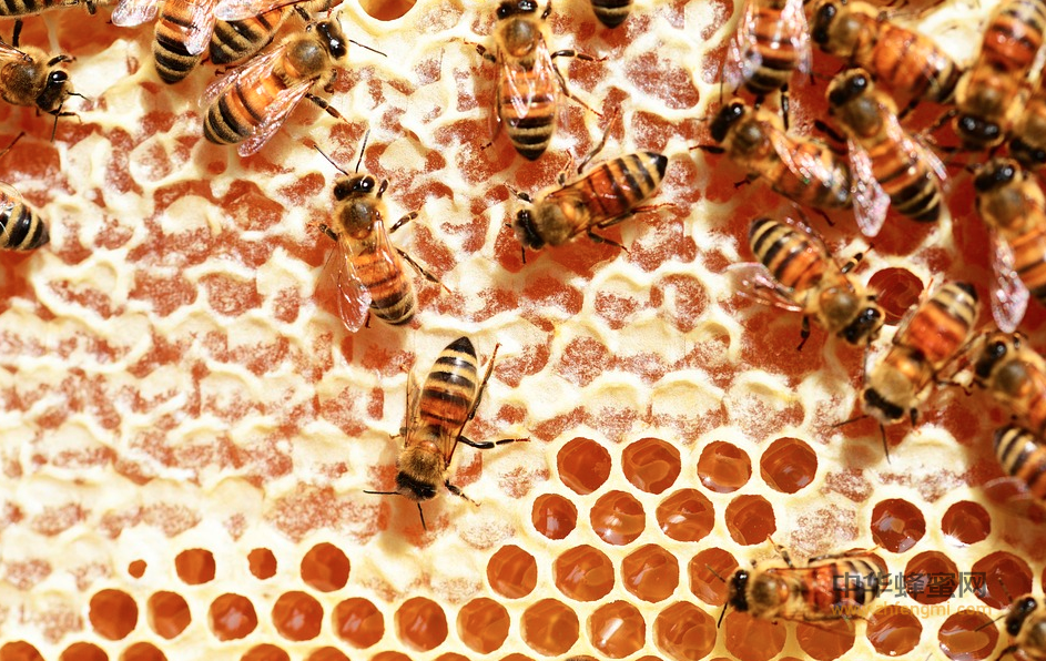 蜂蜜 形成过程 蜜蜂 花蜜