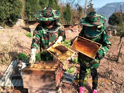 养蜂人 杨章连 土蜂养殖 蜂蜜
