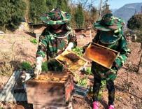 养蜂女强人杨章连的甜蜜事业