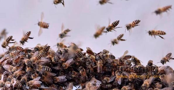 农作物 蜜蜂 授粉 养蜂人 法国