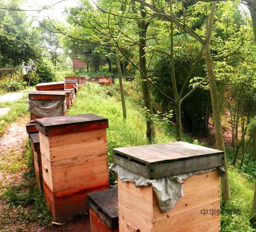 蜂农 蜂箱 中蜂养殖