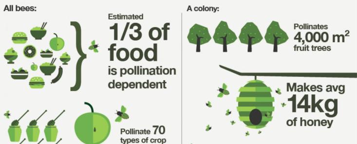 蜜蜂 机器人 蜜蜂授粉