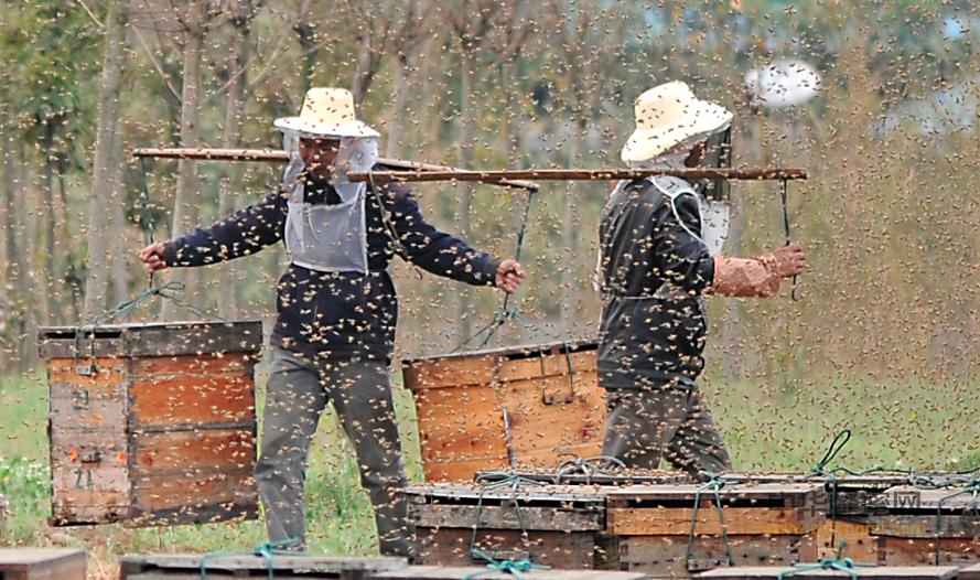 养蜂人 养蜂 蜂蜜