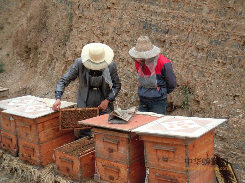 蜜蜂 扶贫 蜜蜂养殖 养蜂 蜂箱