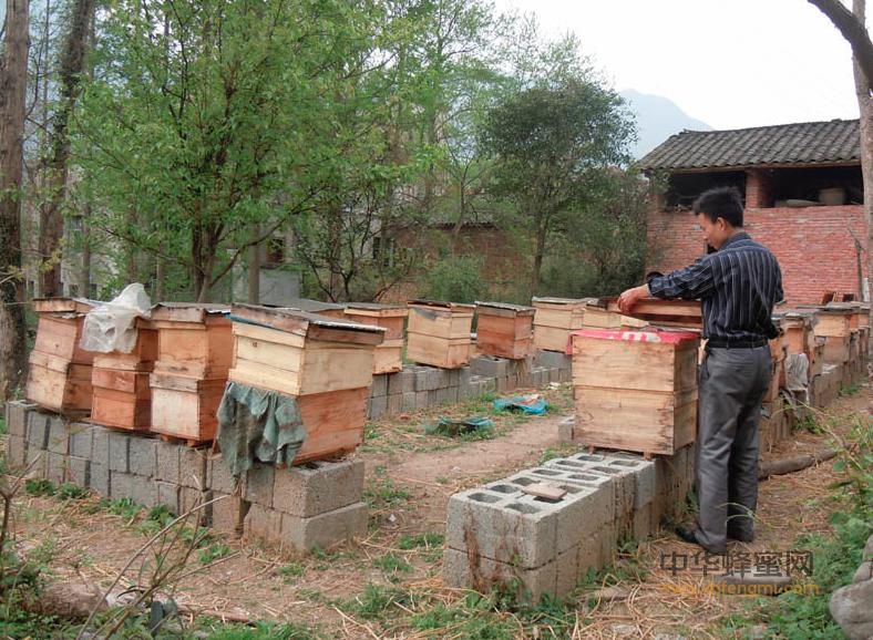 卢氏县 蜜蜂养殖 中蜂养殖 养蜂