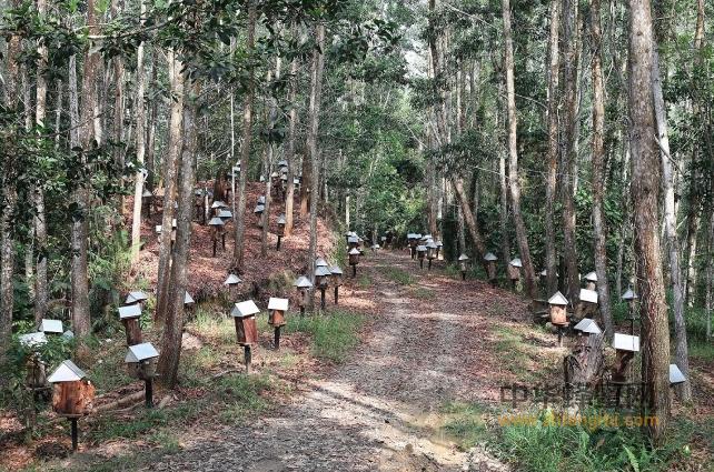 银峰 马来西亚 蜂业 蜜蜂