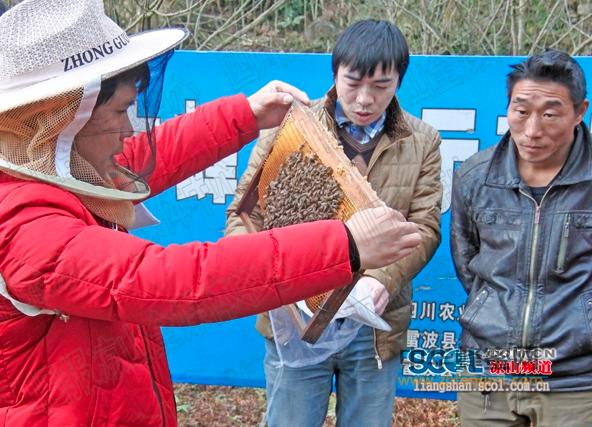 农牧局 雷波县 养蜂技术 养蜂培训