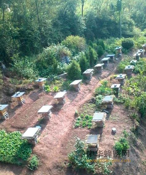 康县 养蜂业 中蜂养殖