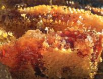 乌克兰2017年对欧盟出口蜂蜜配额已经用完
