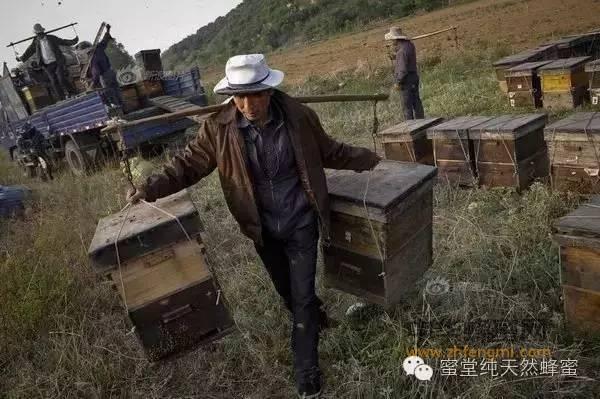 养蜂人少成本高 你还相信低价买到纯正蜂蜜!!