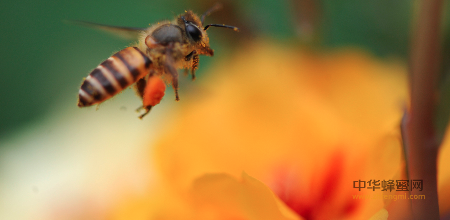蜂业 养蜂 蜂产业 养蜂学会 蜂产品 养蜂补贴