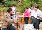 乐昌 养蜂 养蜂业 养蜂技术
