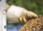 养蜂 养蜂工具 蜂业