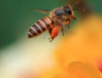 加强科技创新驱动,推进蜂业提质增效