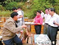 乐昌发展生态养蜂助民增收