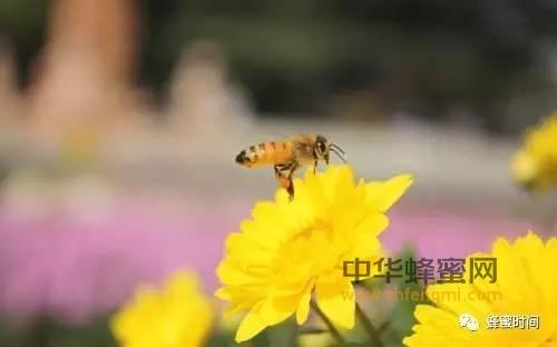 被蜜蜂蜇了,你该怎么办?