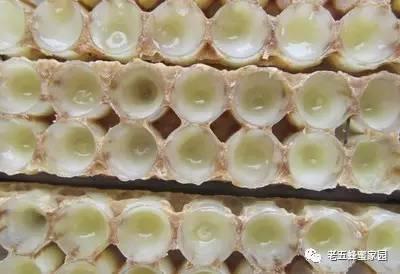 【北大荒蜂蜜】_蜂王浆,王者的食物,食物中的王者!