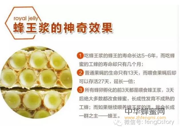 史上最全的介绍二、神奇的蜂产品==蜂王浆