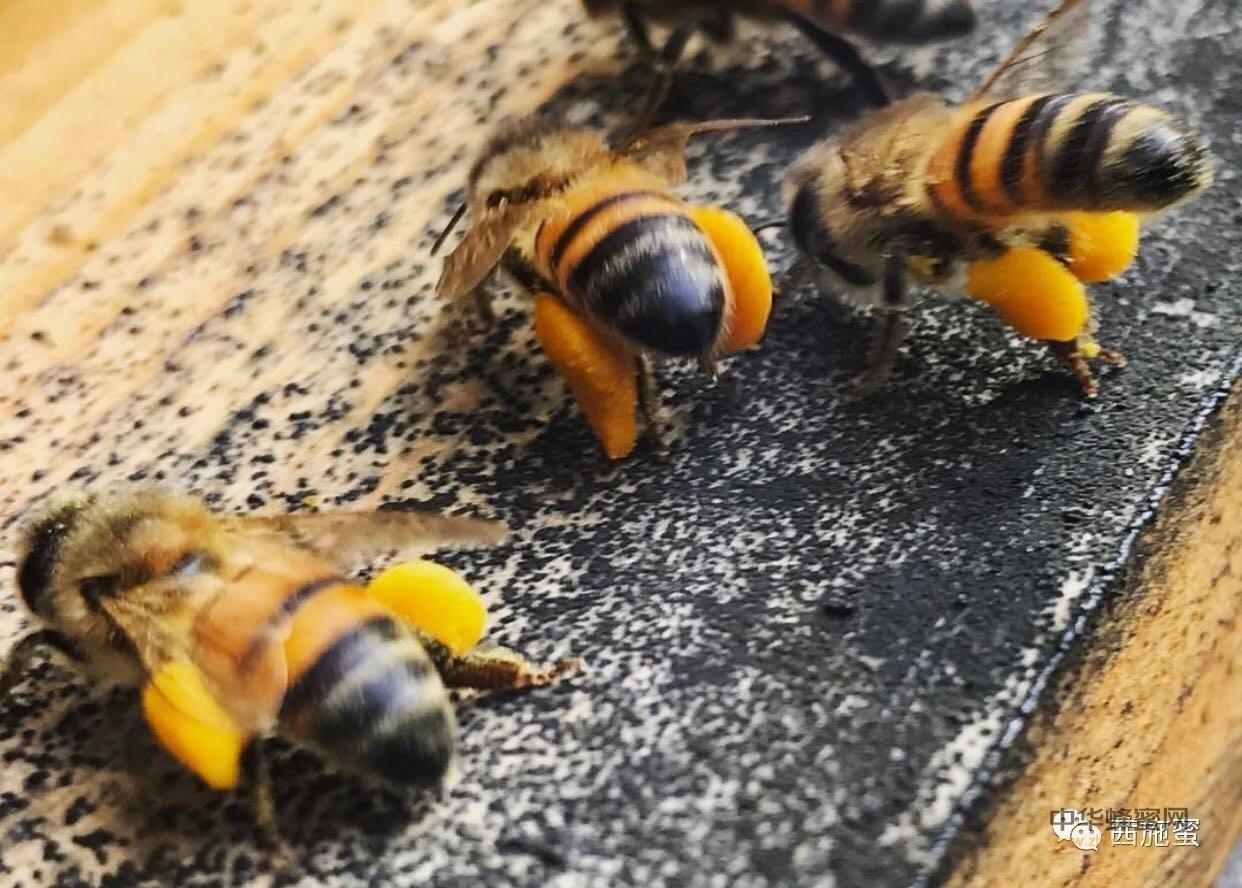 【蜂蜜的吃法】_农家蜜需要消毒杀菌么?