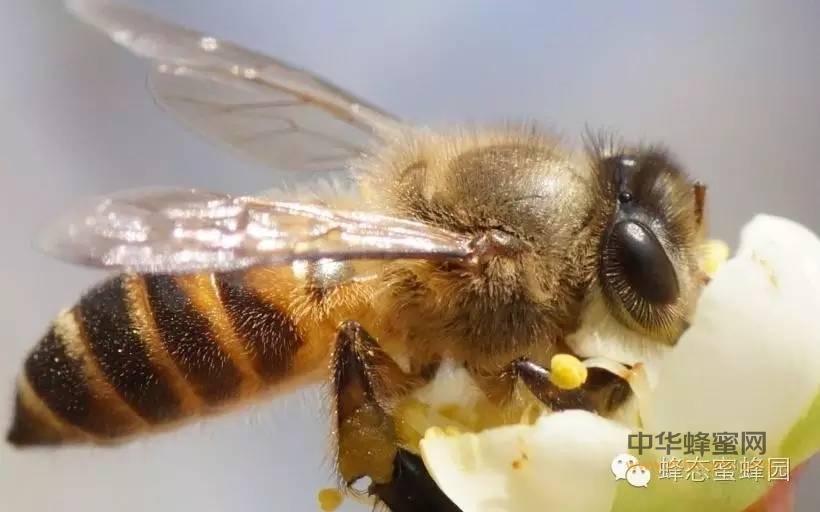 【蜂蜜美容护肤小常识】_常服蜂蜜,岁晋期颐
