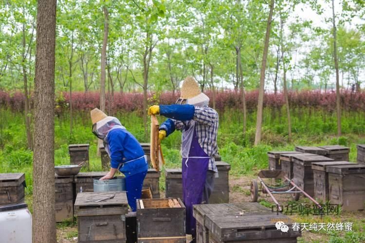 【什么蜂蜜】_一文告诉你什么才是真正的天然蜂产品!