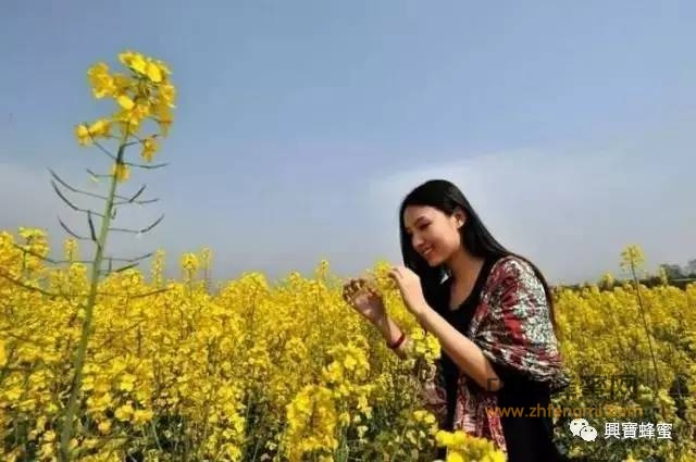 """【孕妇可以喝蜂蜜吗】_阳春三月,带你赏尽人间""""十里""""油菜花"""