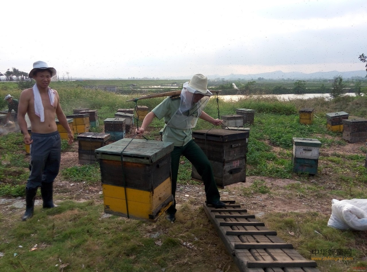 对不起,我要去养蜂采蜜了,不要再找我了