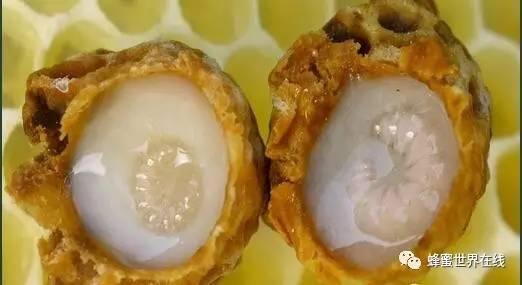 蜂王浆是如何引起科学家关注的?