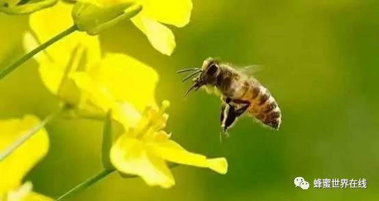 养蜂月历,有了它一年四季都不怕!