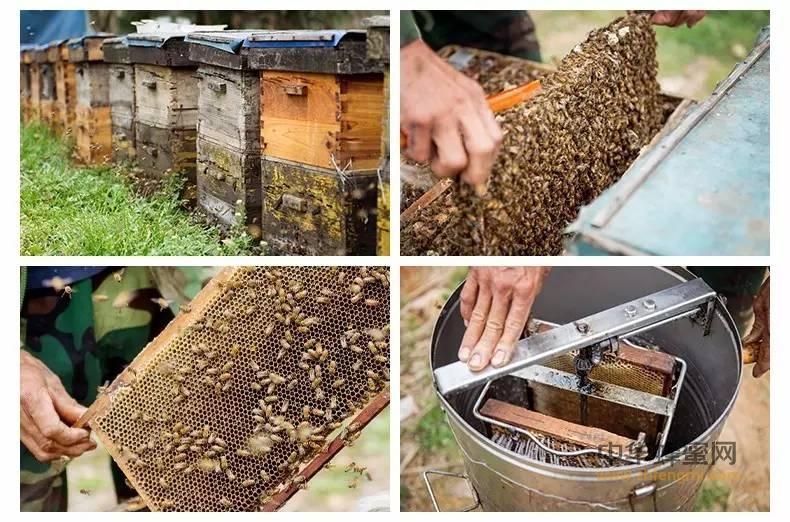 为什么真蜜就卖不过假蜜呢,难道是顾客图便宜么?