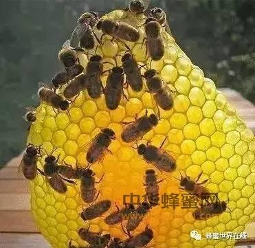 蜂巢对过敏性鼻炎有良好效果!