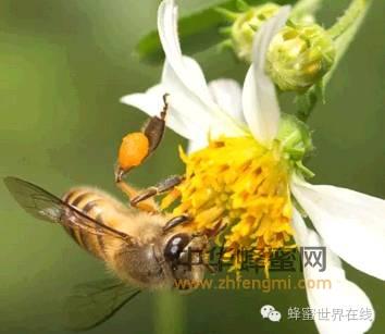 【欧舒丹蜂蜜面霜】_蜂蜜和花蜜的区别!